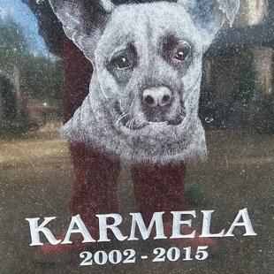Места памяти наших любимых домашних животных